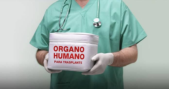 importancia-de-un-trasplante-de-organos imágen de artículo