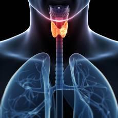 cancer-de-tiroides-ante-que-sintomas-debemos-prevenirnos imágen de artículo